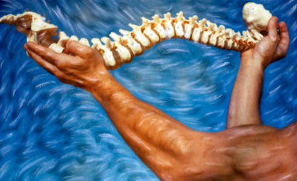 The Importance of the Neuro-Spinal System